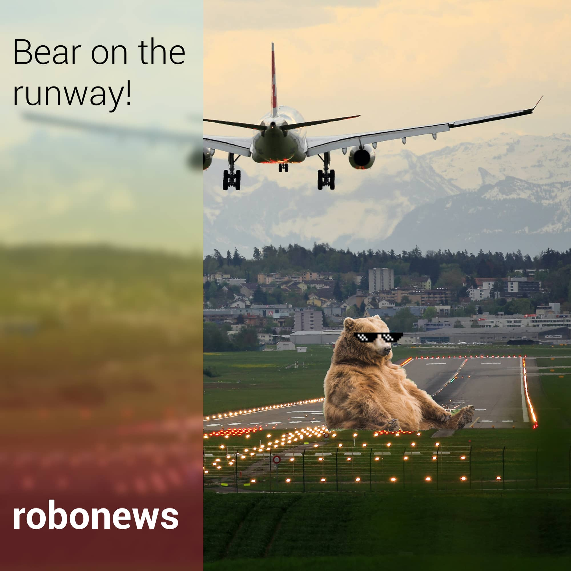 Bear on the Runway!