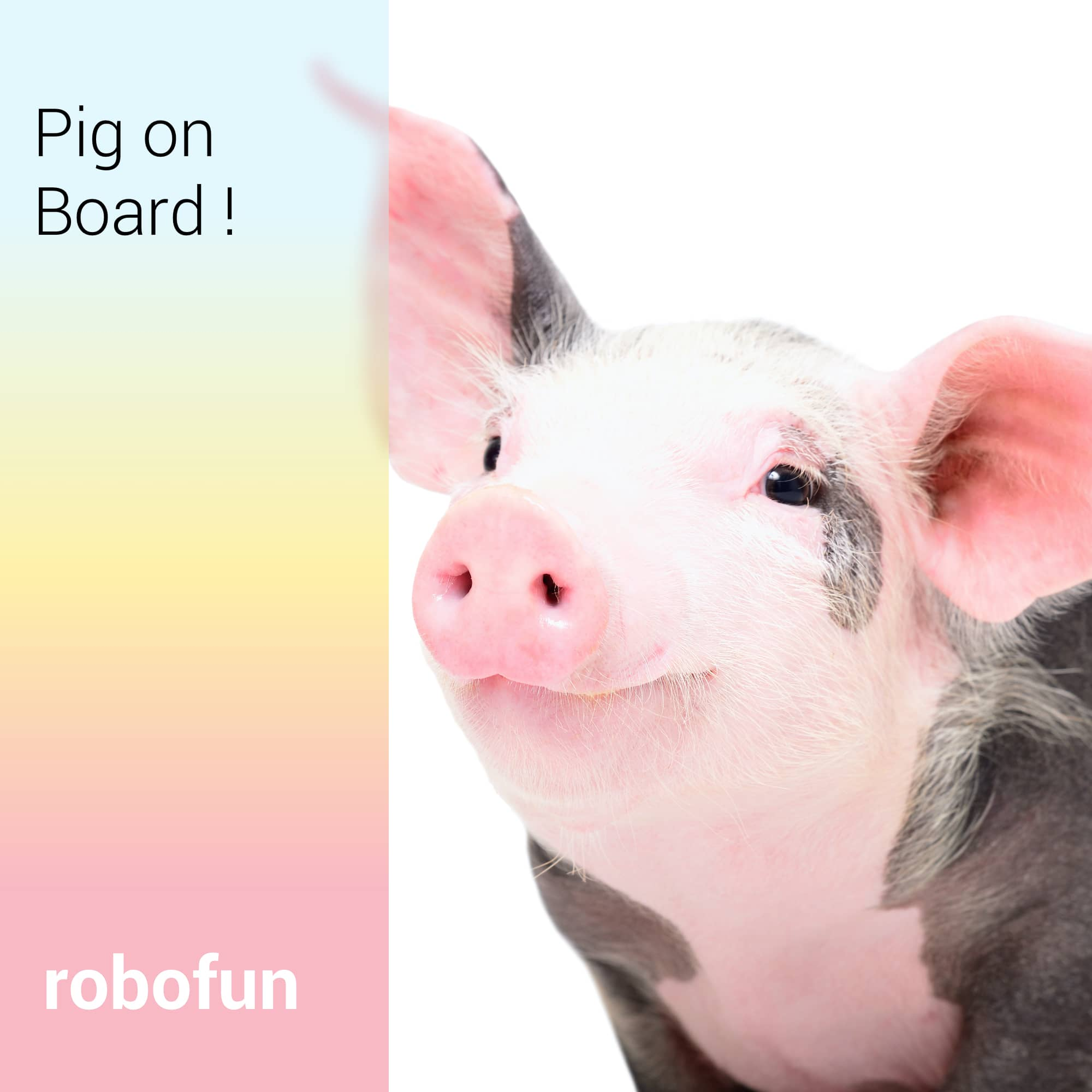 Pig On Board!