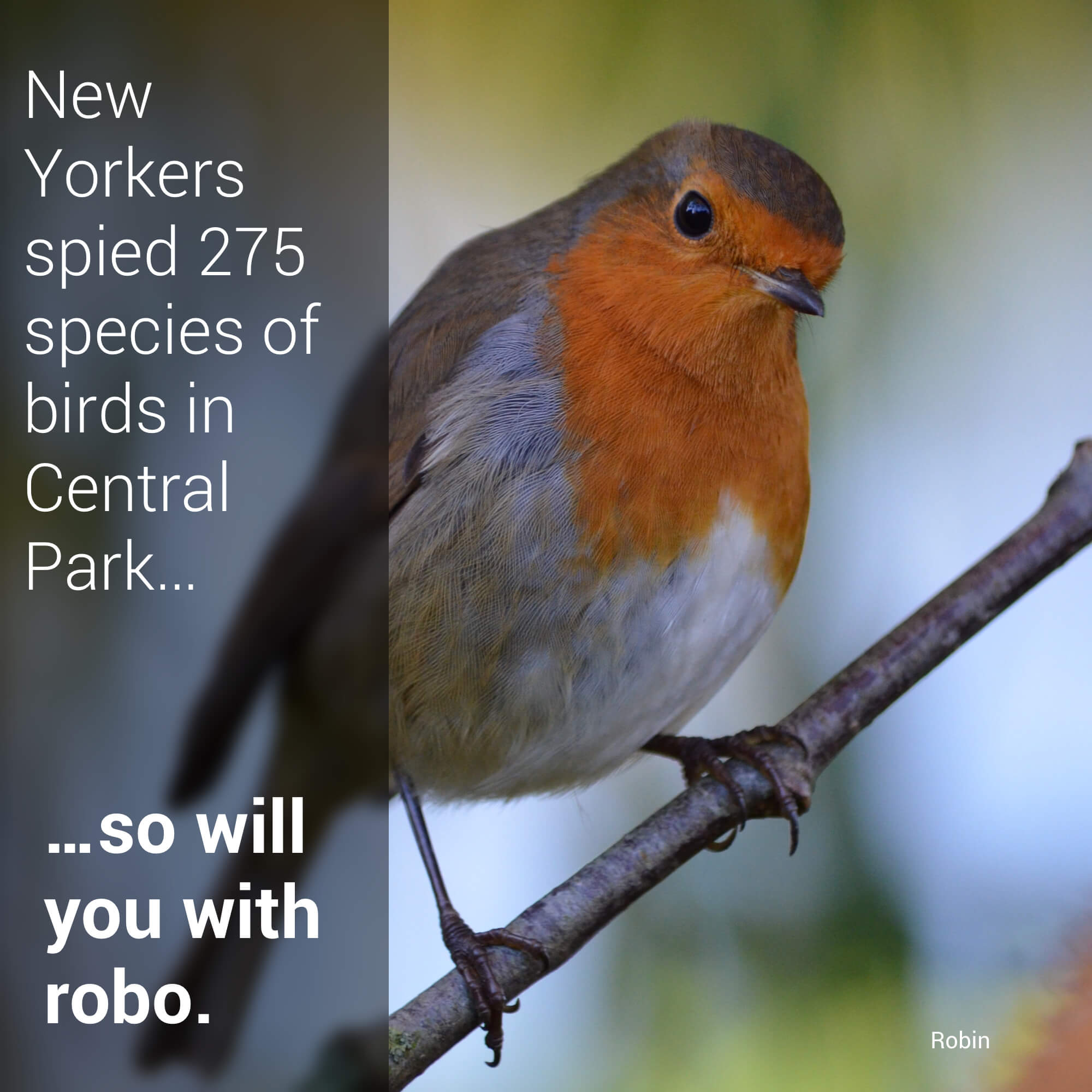 Birds Of Central Park