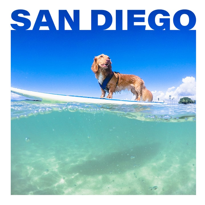 Surf Dog Competition in San Diego